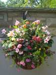 hanging basket for sun